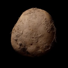Artist who sold photo of potato for $1m joins Animoca Brands as creative director